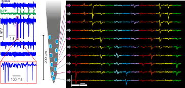 Hippocampal sharp-wave ripples and single units