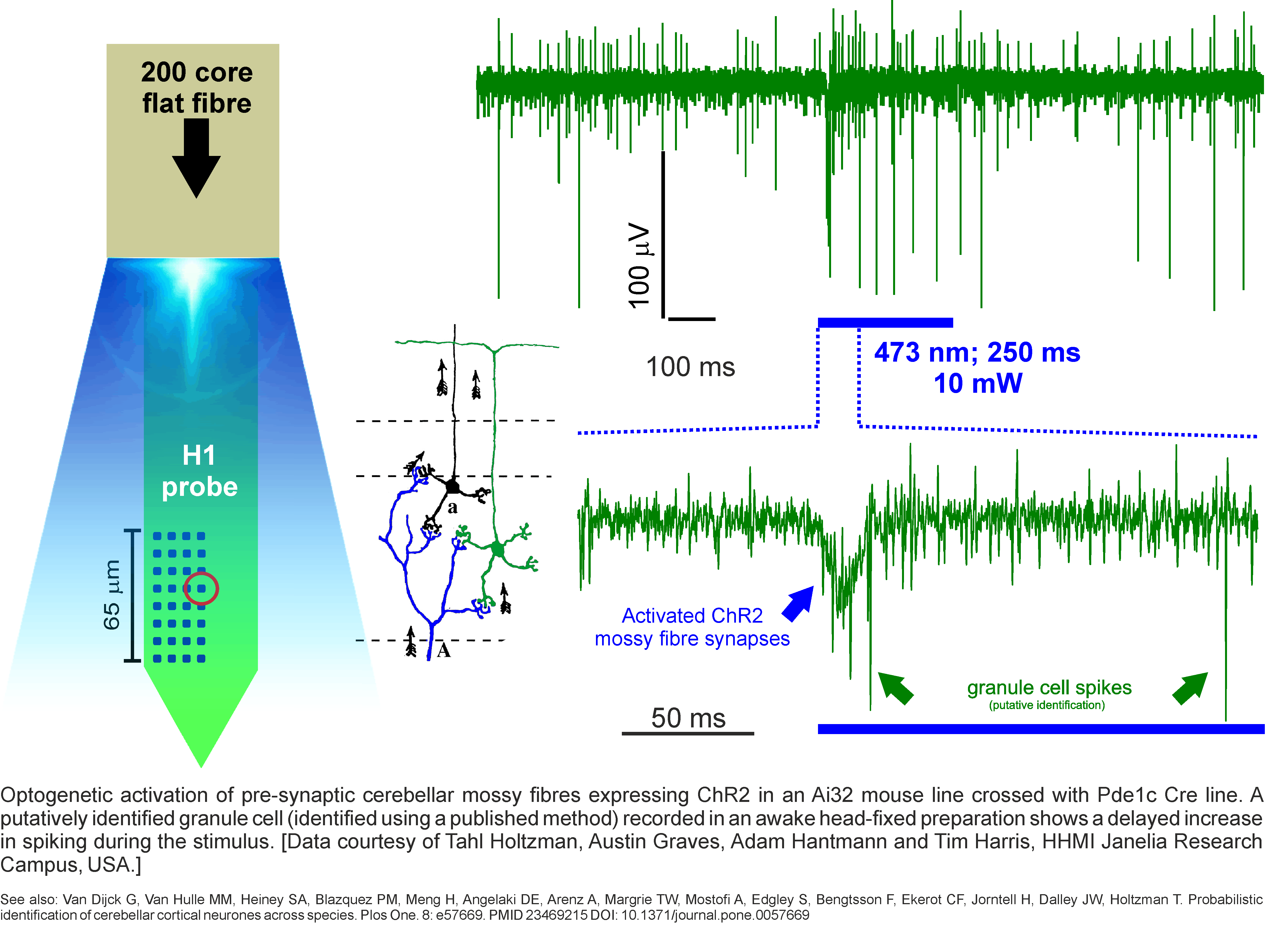 Optogenetics   Cambridge NeuroTech